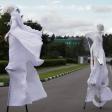 Белые ходулисты