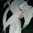 Белый ходулист